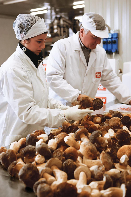 Controllo qualità funghi porcini surgelati Asiago Food