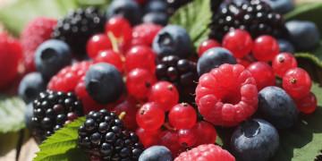 frutti-di-bosco-surgelati-produzione-asiago-food