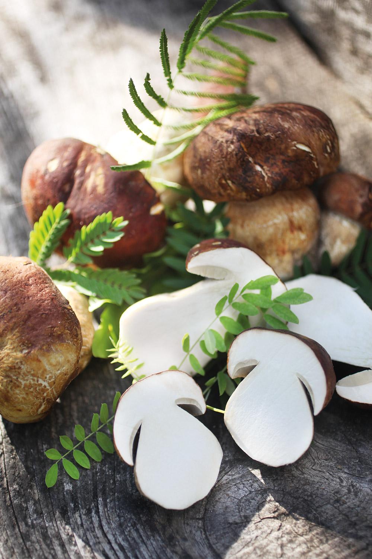 Funghi surgelati produzione funghi porcini Asiago Food.